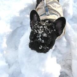 2014雪遊び③