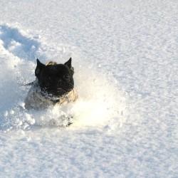 2014雪遊び⑥